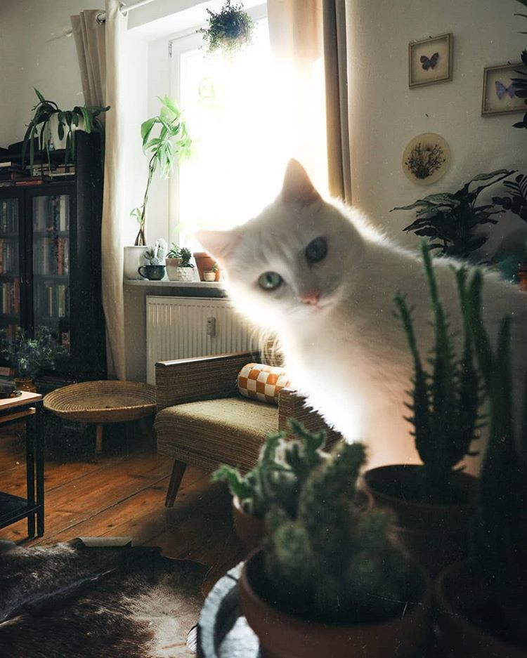 Starrt Euch Eure Katze Von Zeit Zu Zeit Auch So Irre An Solebich Apartmenttherapy Dailyview Vintagevibes Lightinsp Katzen Katzenbabys Susseste Haustiere