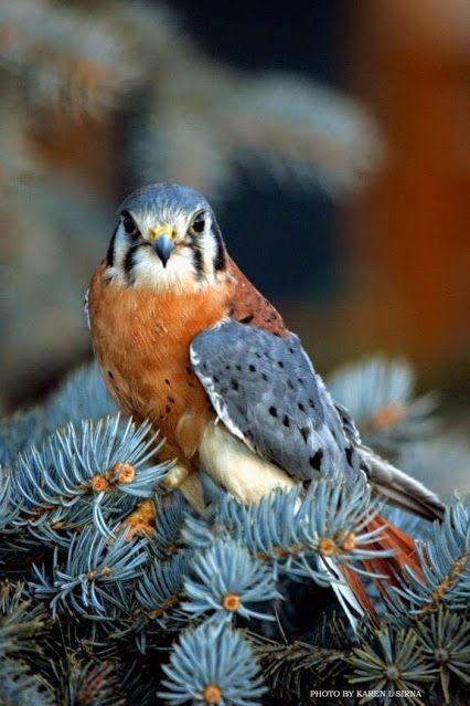 ZooFitoSfera животные и растения – Google+ | Животные ...