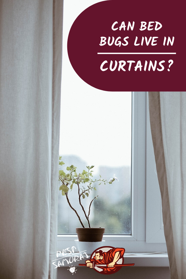 Can bed bugs live in curtains and why would bed bugs make