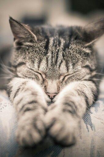 Feliz sueño