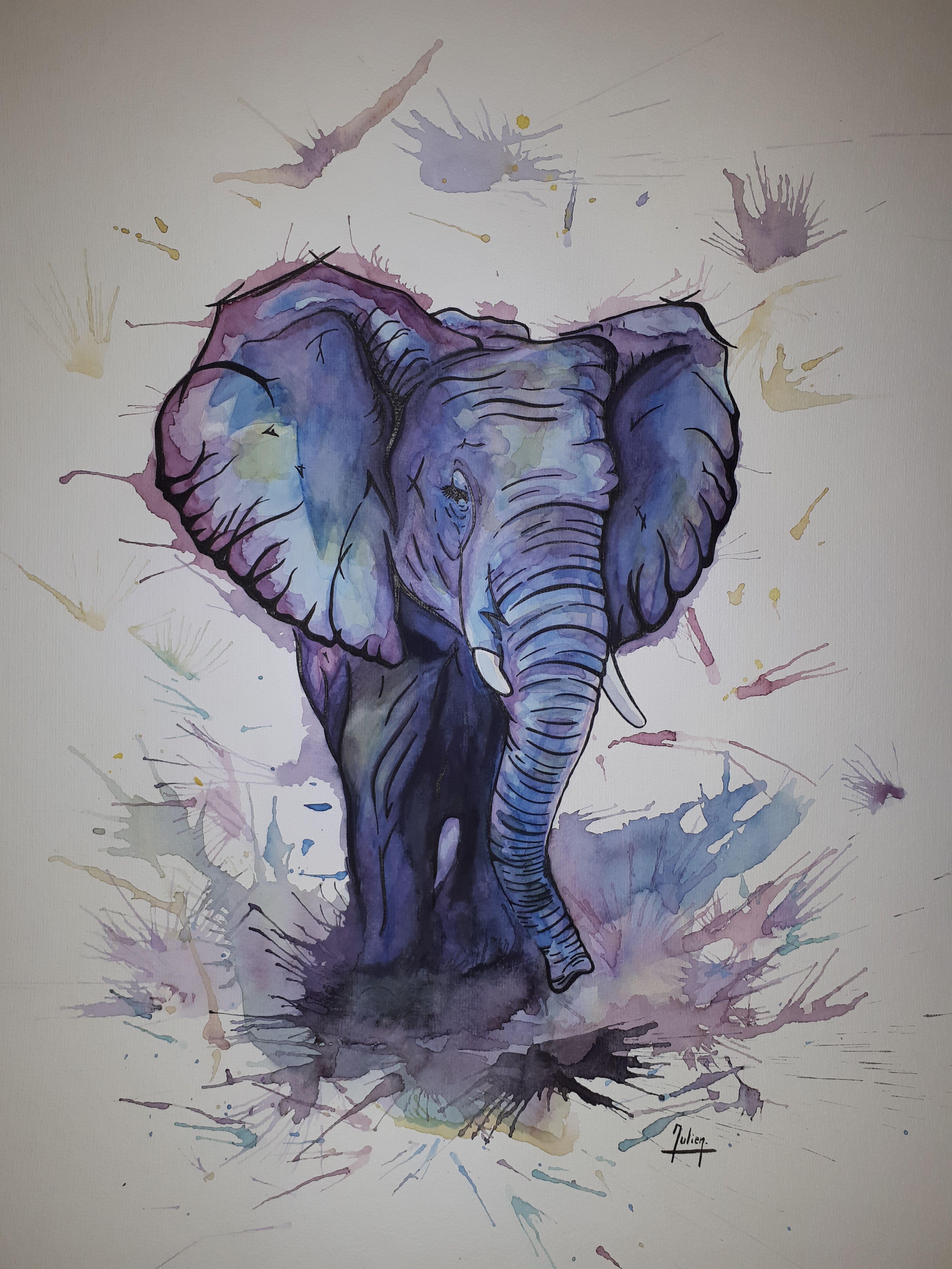Elephant A L Aquarelle Animaux D Aquarelle Dessin Chouette Et