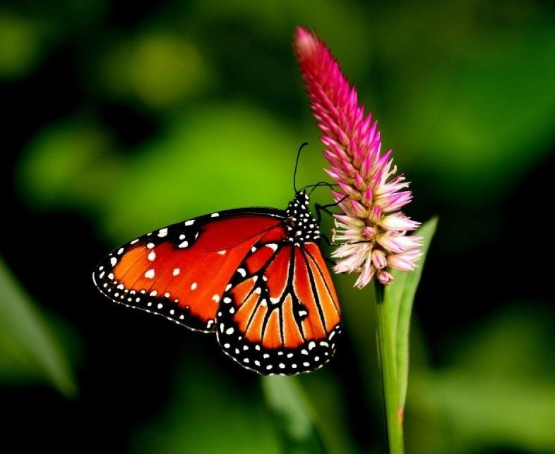 Cute Butterfly Wallpaper High Quality Desktop, iphone and ...