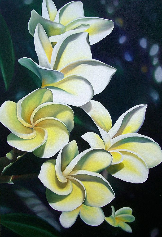 """Image of """"Plumeria Blossoms"""" Giclee"""