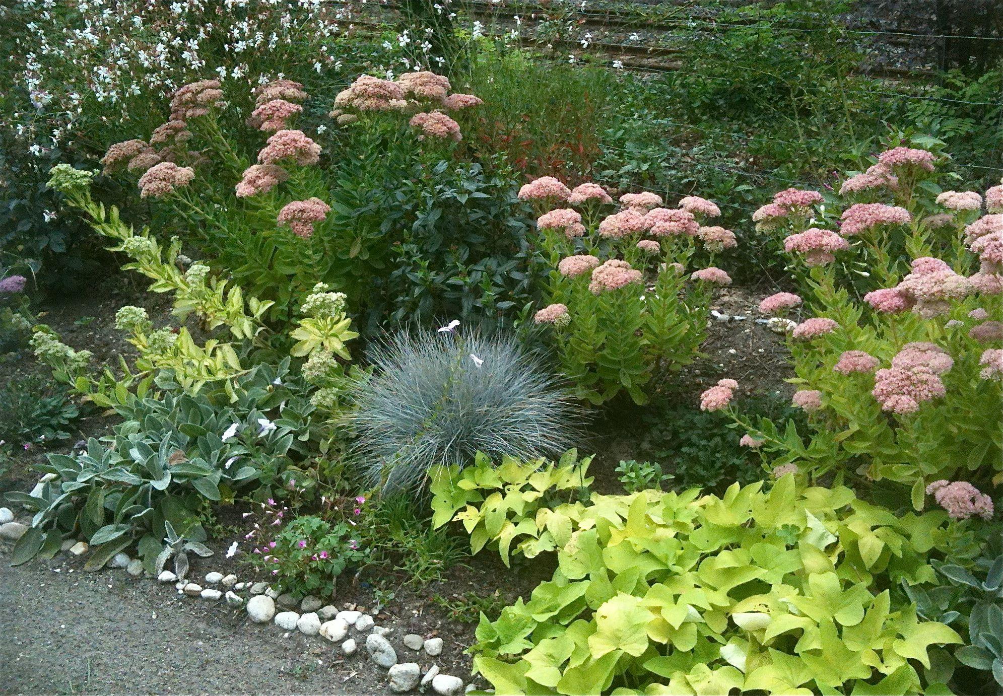 Dans notre jardin plate bande plein sud: Sedum Autumn Joy et sedum ...