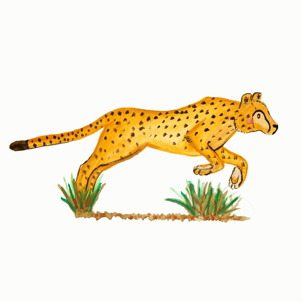 Water color cheetah available as an eco friendly greeting card water color cheetah available as an eco friendly greeting card kristyandbryce Images