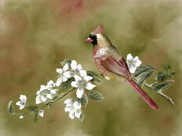 17 Best images about Bird Painting Examples on Pinterest | Kevin o ...