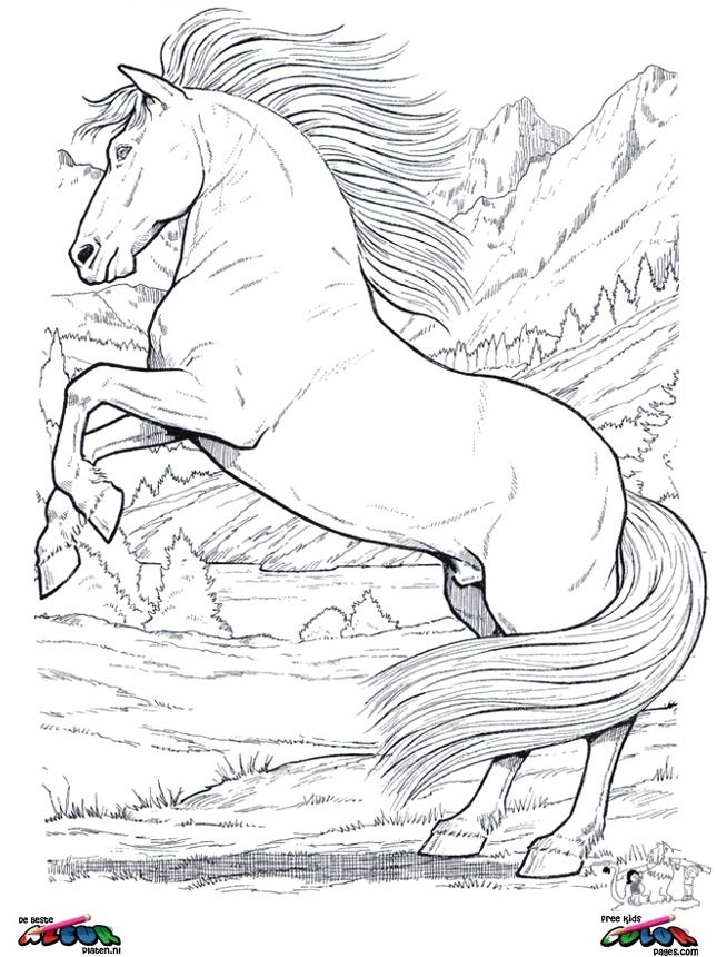 Realistic Horse Coloring Pages Horses Coloring Page