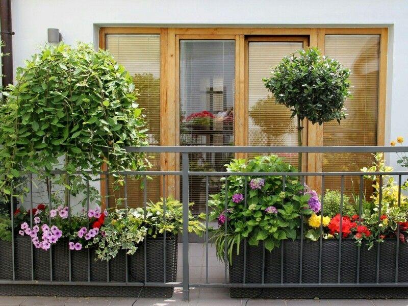 Small garden, balkon