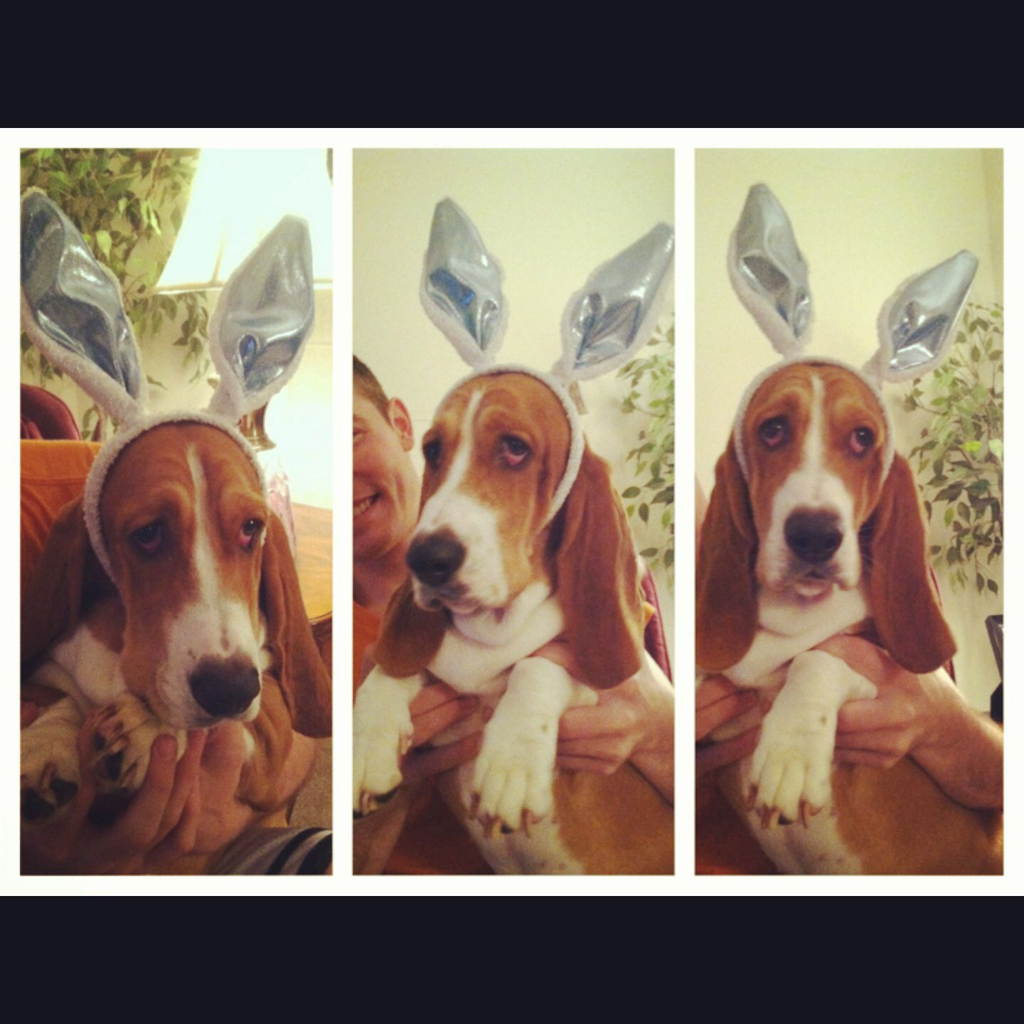 Happy easter from lola lola pinterest happy easter
