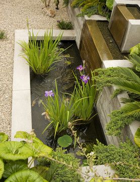 Fish pond with clean lines