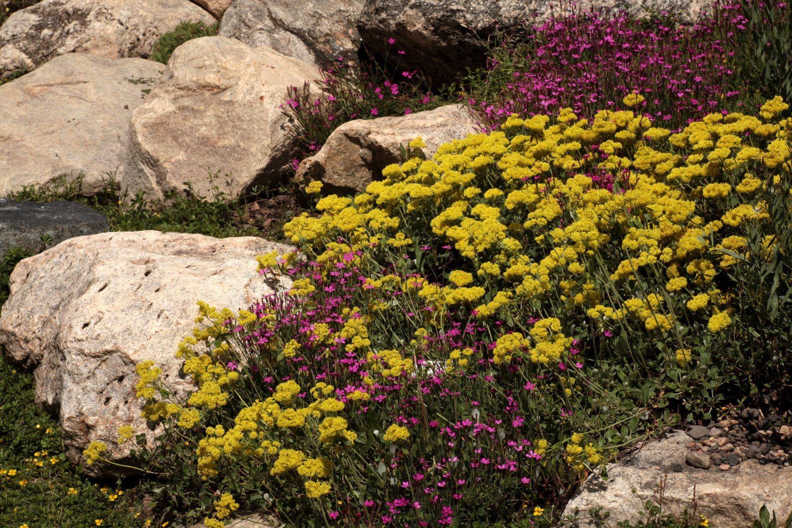 Seed-a-holic Times: Colorado Day 7 - Yampa River Botanic Park ...