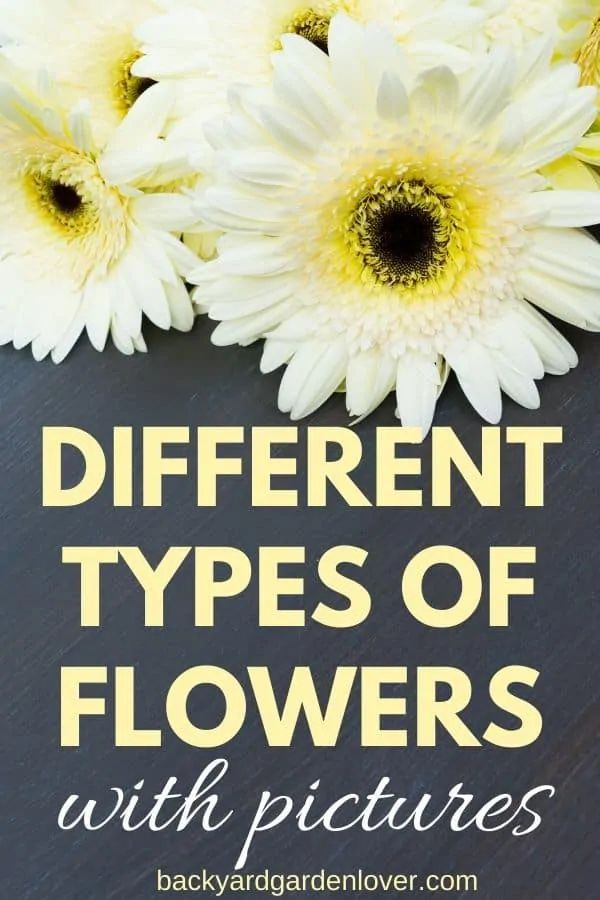 Enjoy a virtual stroll through this collection of different types of flowers. See pictures of each flower, and envision it in your own garden. Beautiful, colorful, and sometimes fragrant, you're sure to find a few you'll love! #typesofflowers #flowers #prettyflowers #grden #flowergarden #flowergardenideas