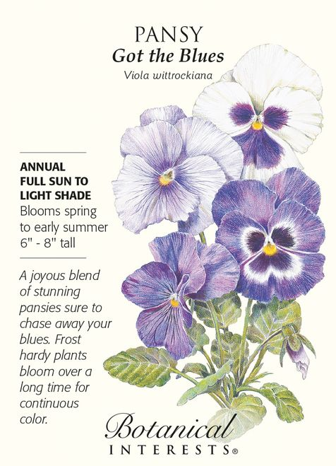 Got The Blues Pansy Seeds 200 Mg Annual Pansies Flowers Pansies Botanical Flowers