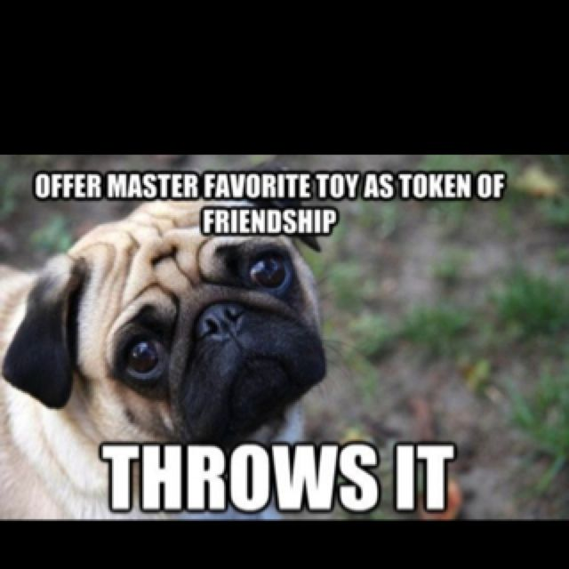 Offer Master Favorite Toy As Token Of Friendship Throws It Pugs