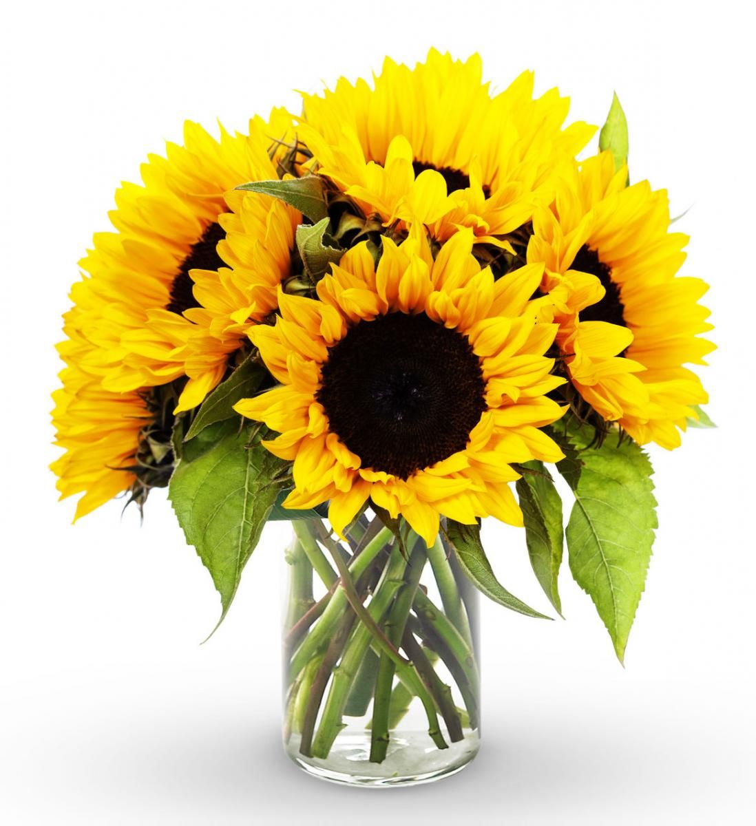 North Dakota Florists Amp Flowers Avas Flowers Sunflower Bouquets Avas Flowers White Rose Bouquet