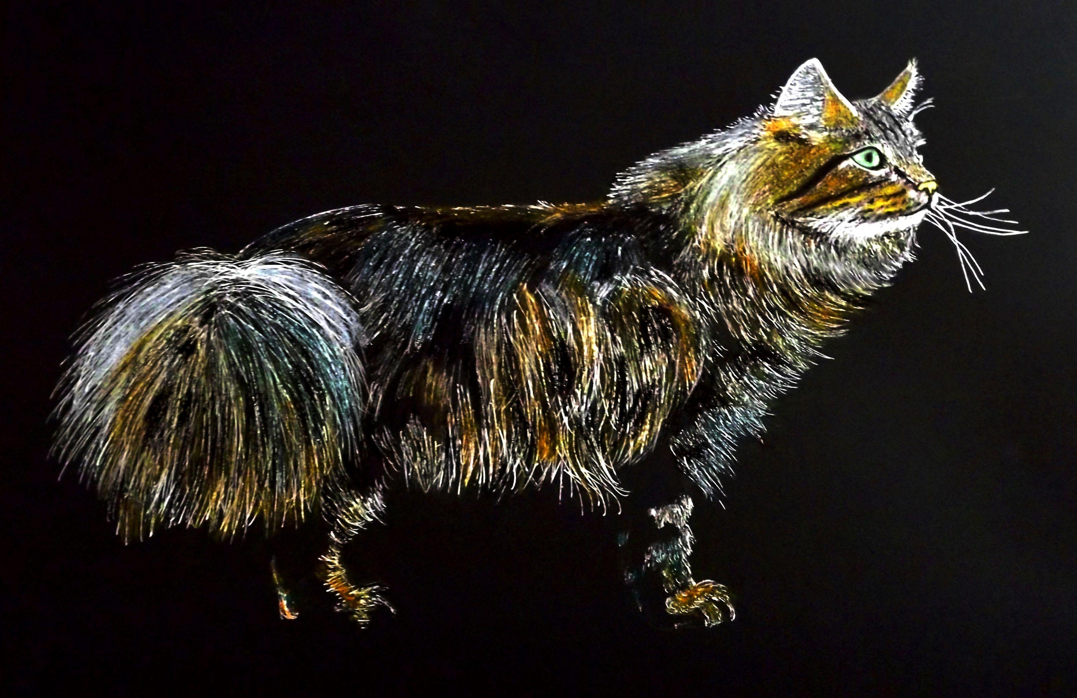 Blue Tabby Norwegian Forest Cat (by Zizi Lagadec). #ink #drawing