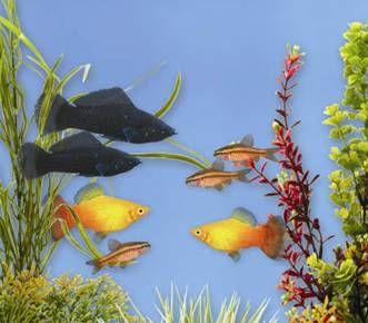 Pet Fish For Sale Tropical And Freshwater Fish Petsmart Pet Fish Fish Fish Pet