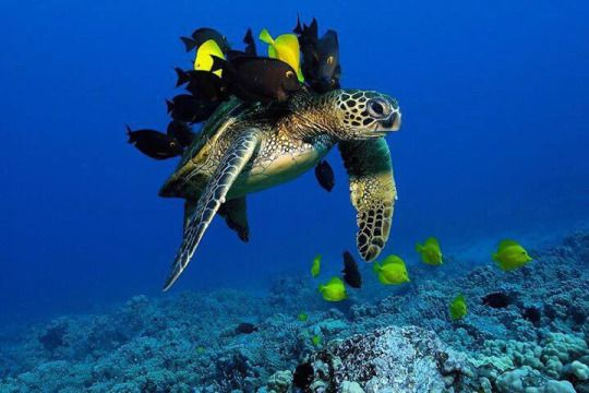 turtle and fishes