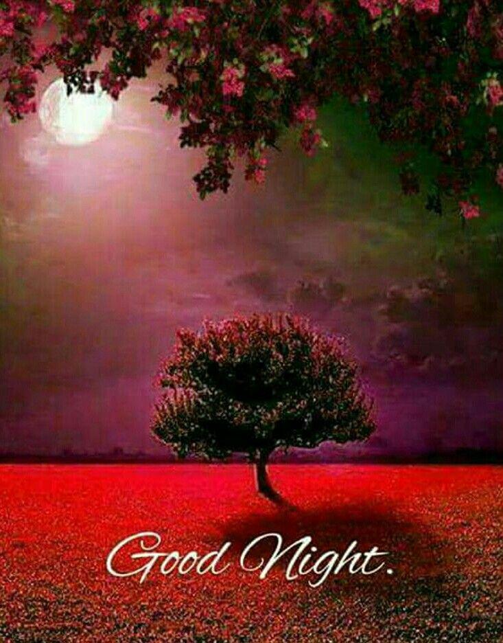 Good Night My Gracefully Serene Beauty Notte Buonanotte Immagini Della Natura