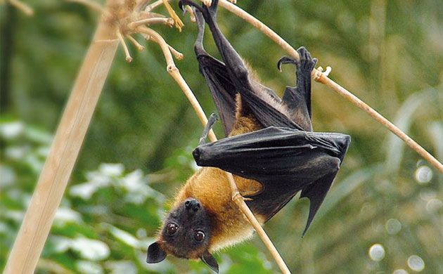 Pin By Ray Roles On Wildlife Pinterest Fruit Bat Animals And