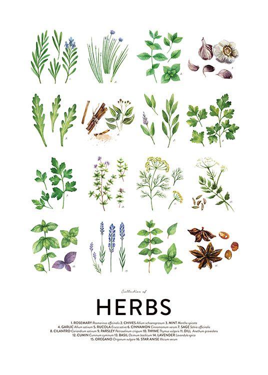 Culinary Herbs Posters Poster Kuche Kuchenkrauter Krauter Illustration