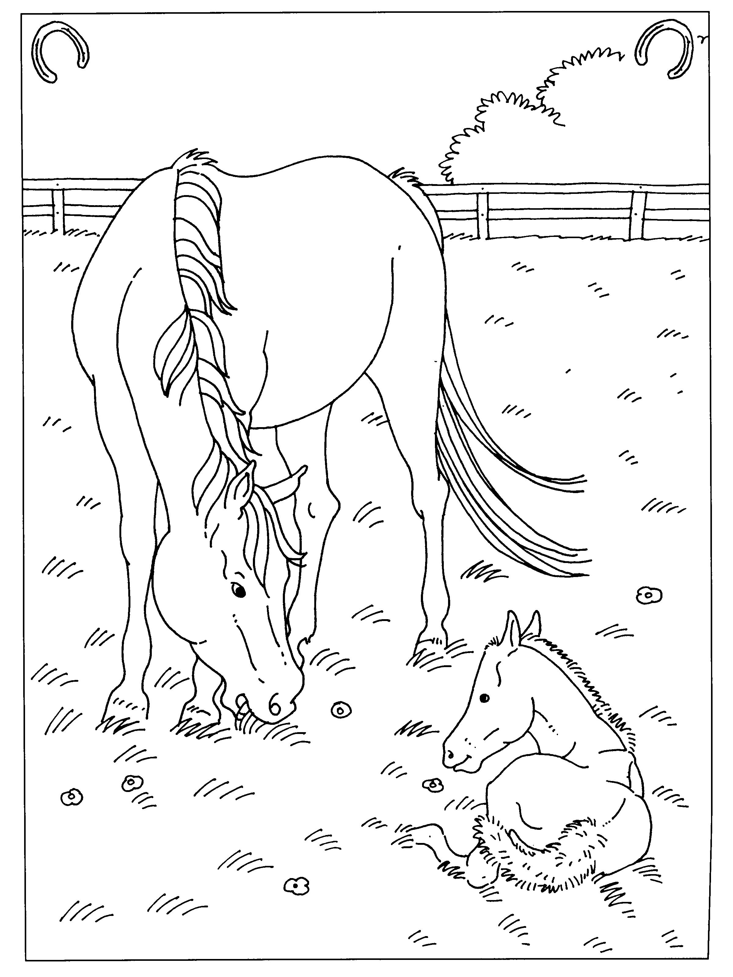 Elegant Kleurplaten Paarden In De Stal