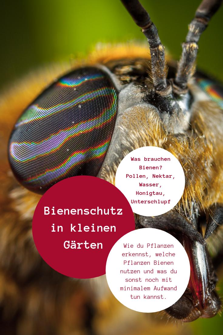 Am Einfachsten Hilft Du Insekten Wenn Du Ihre Bedurfnisse Kennst Und Weisst Wie Du Sie In Deinem Garte Pflanzen Erkennen Bienenfreundliche Pflanzen Pflanzen