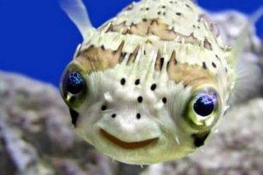 Los ojos del pez esconden el gran secreto de la evolución de su especie
