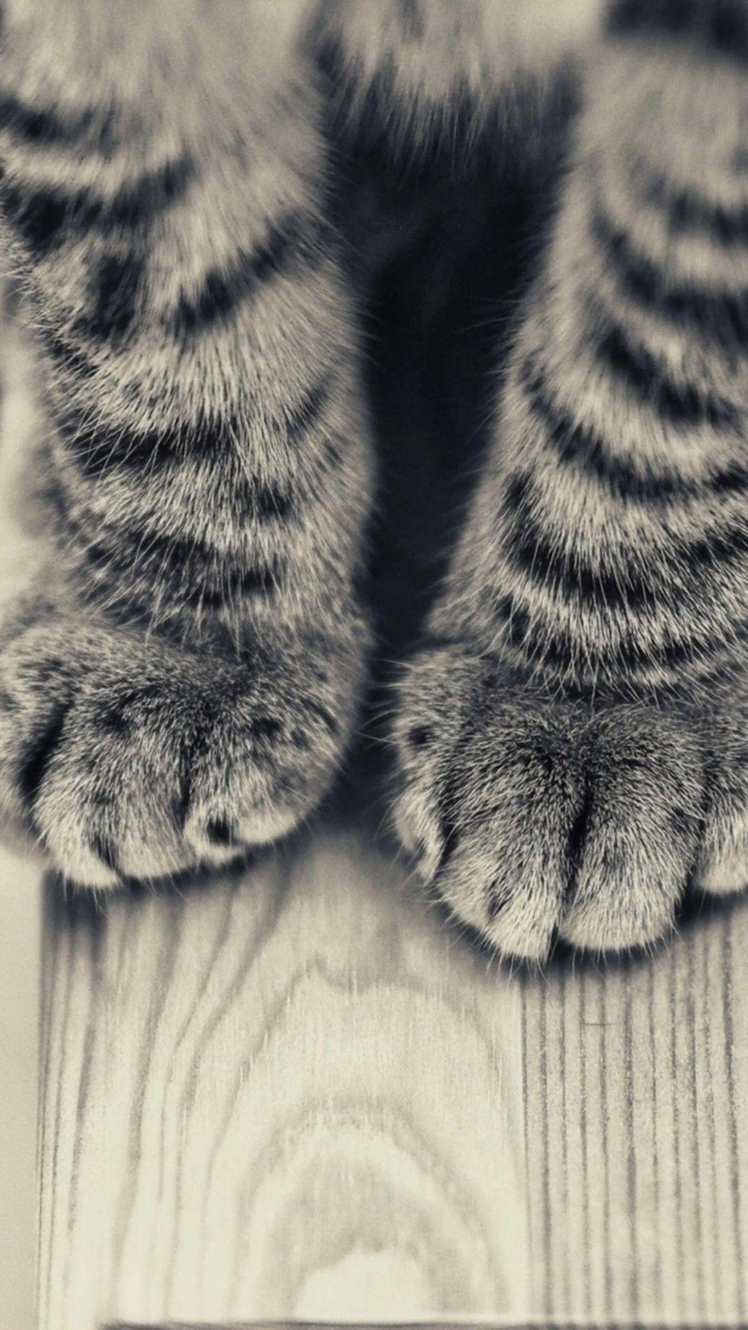 Animal Galaxy S4 Wallpapers Hd 79 Iphone Wallpaper Kitten