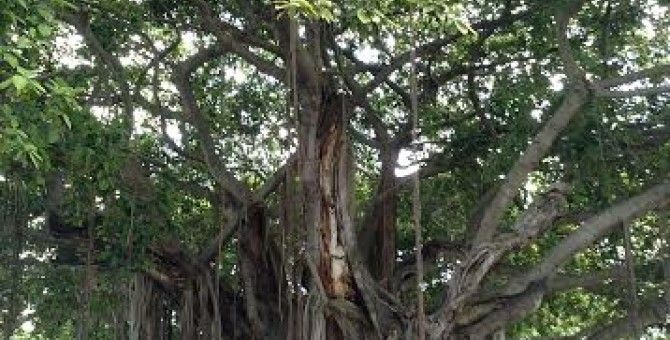 What an amazing tree