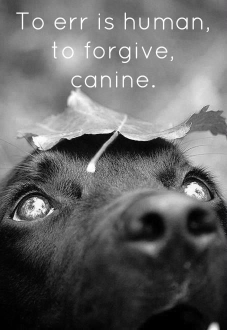 amazing dog portrait and true quote | #dog #dogs #pet #quote | www.fordogtrainers.com