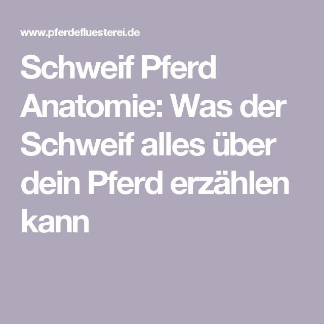 Pferdeschweif Anatomie   Horse facts and Horse
