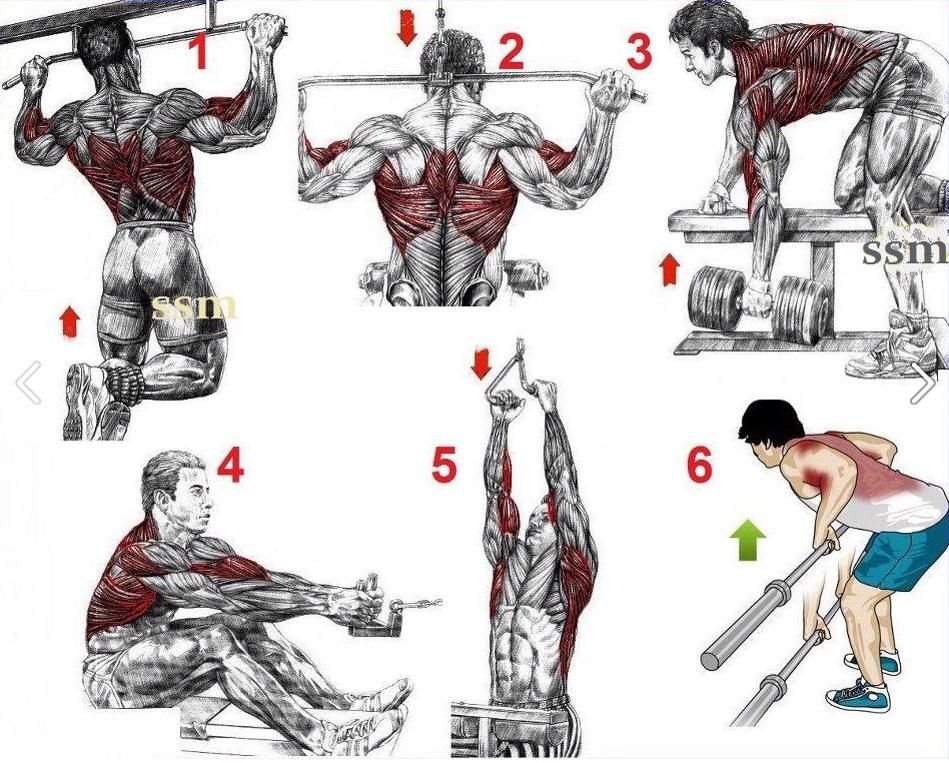 Back Workout | Body & Fitness | Pinterest | Workout, Gym ...