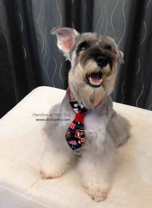 Want to make your furry friend a dog tie very easy just follow the want to make your furry friend a dog tie very easy just follow the ccuart Image collections