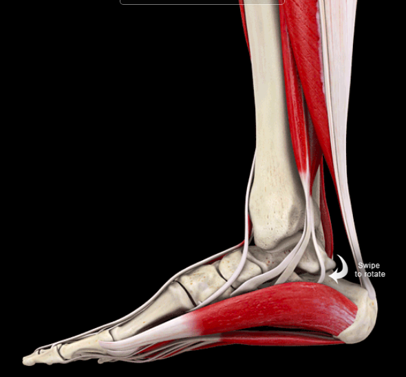 50+ Tight lower calf muscles trends