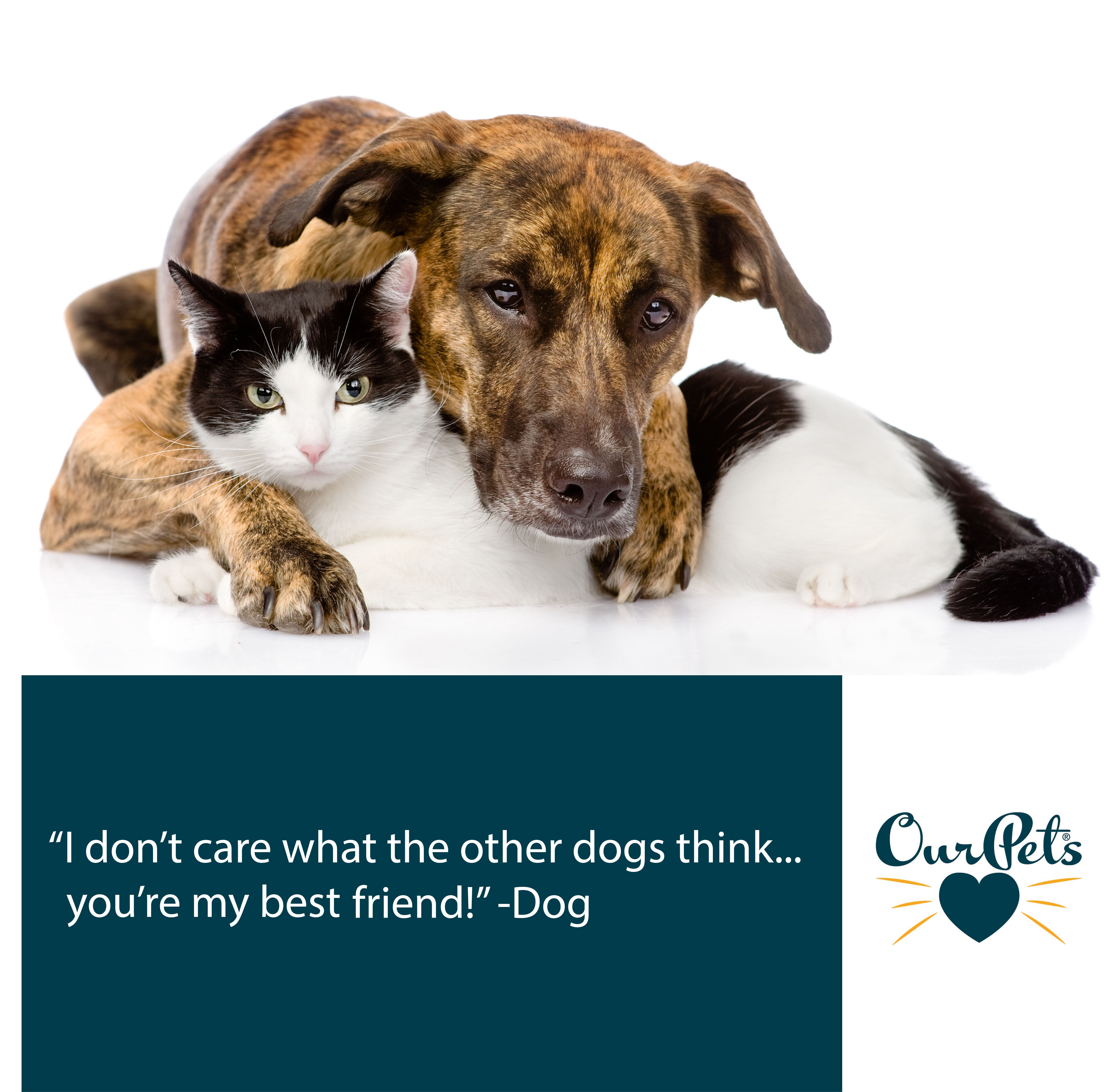 Pin By Chinarose On Animals Pets Best Friends For Life Dogs