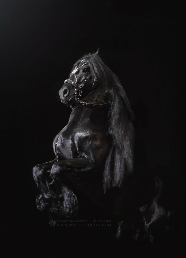 736 best images about Did Someone Say Horses? on Pinterest | Oldenburg, Dressage and Palomino | Friesan horse, Pretty  horses, Work horses