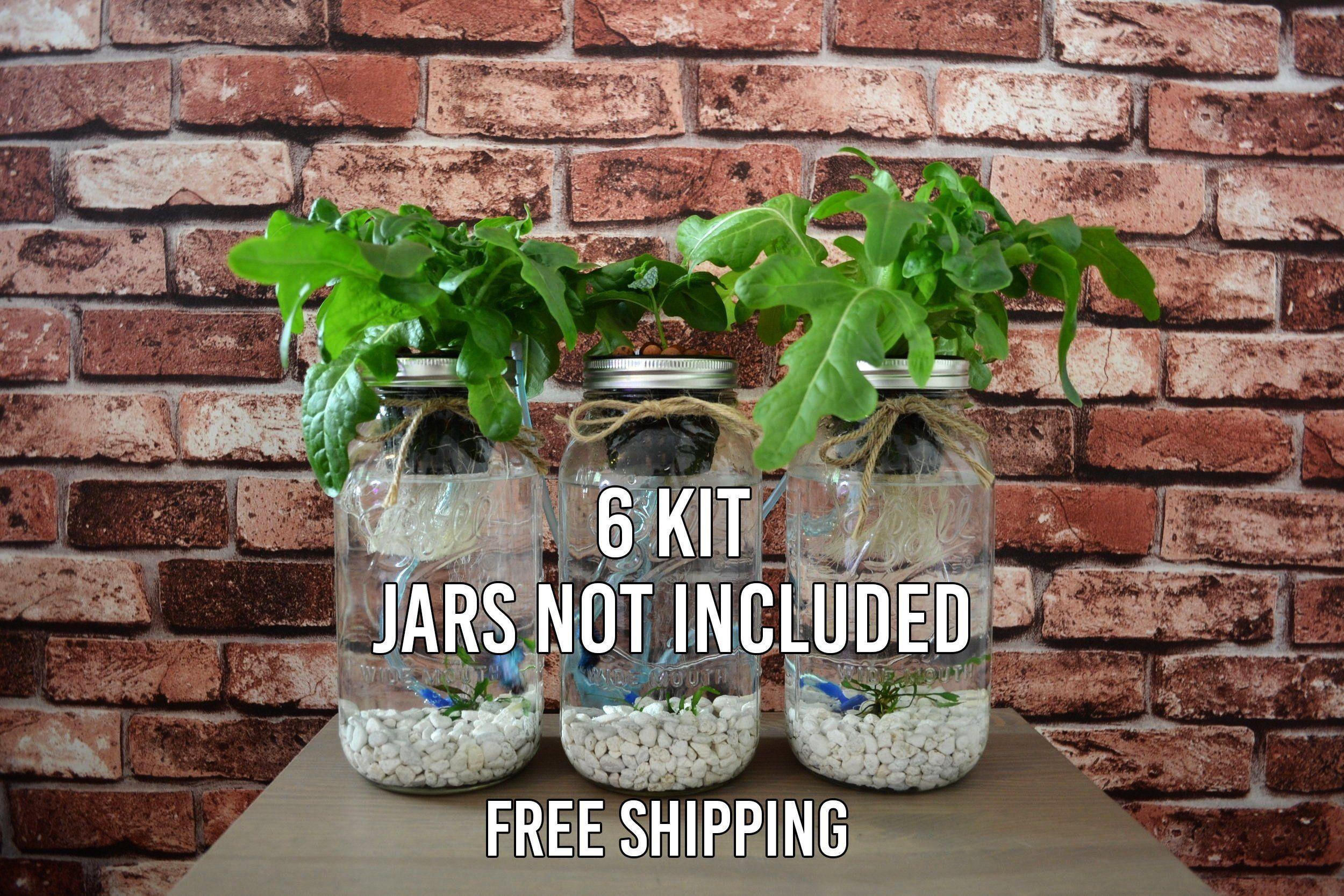 6 mason jar aquaponics kit build your own hydroponics herb