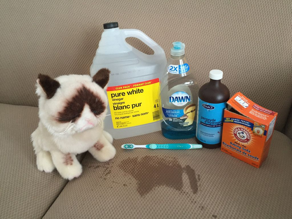 Cat Pee Cleanup Miracle Potion And You Don T Have To Buy