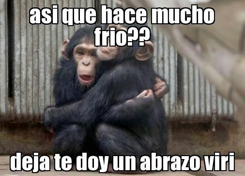 Hace Mucho Frio Imagenes Google Search Animals Gorilla