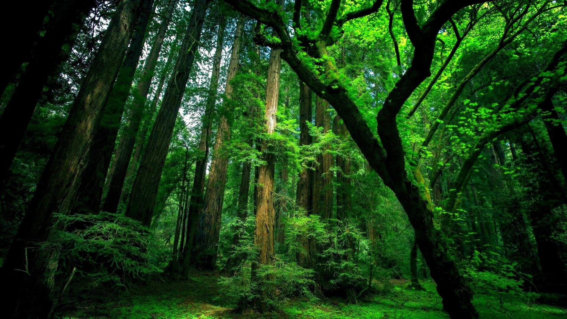 Natural Green Forest Wallpaper