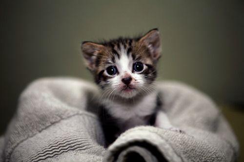 Cats Wallpapers For Desktop Small Cat Sleeping Cute Kitten Black Is Smiling