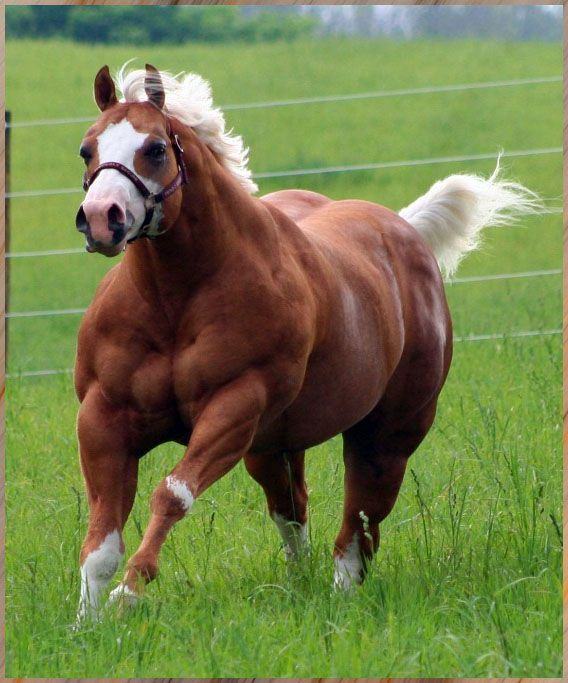 SERIOUSLY SECURE ~  TRIPLE REGISTERED STALLION!  Look at the condition on this horse!! WOW!!