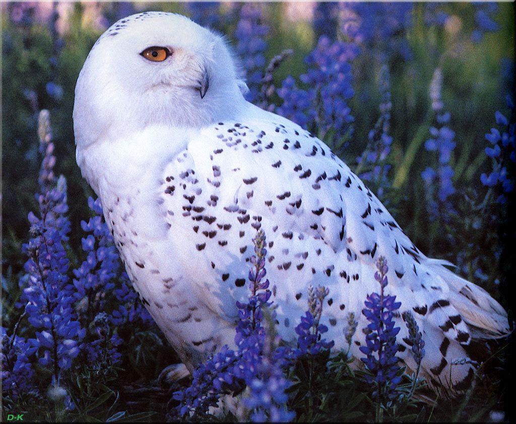 pictures of birds of north america   email delete edit info admin description birds of north america
