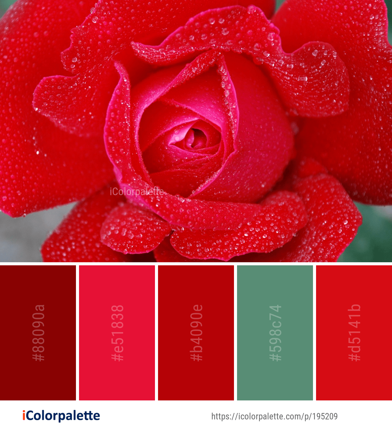 Color Palette Ideas From 9097 Flower Images Icolorpalette Color Palette Color Red Flowers