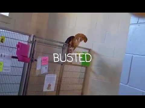 watch a ninja dog attempt to escape an animal shelter