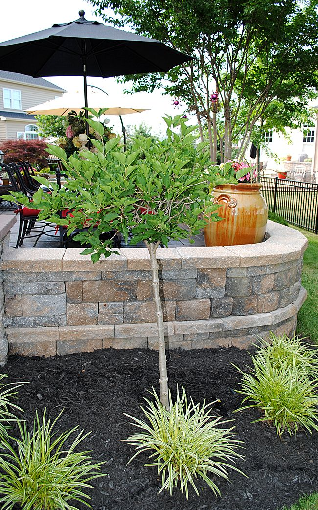 8 Great Ideas for Backyard Landscaping | Black mulch, Yards and ...