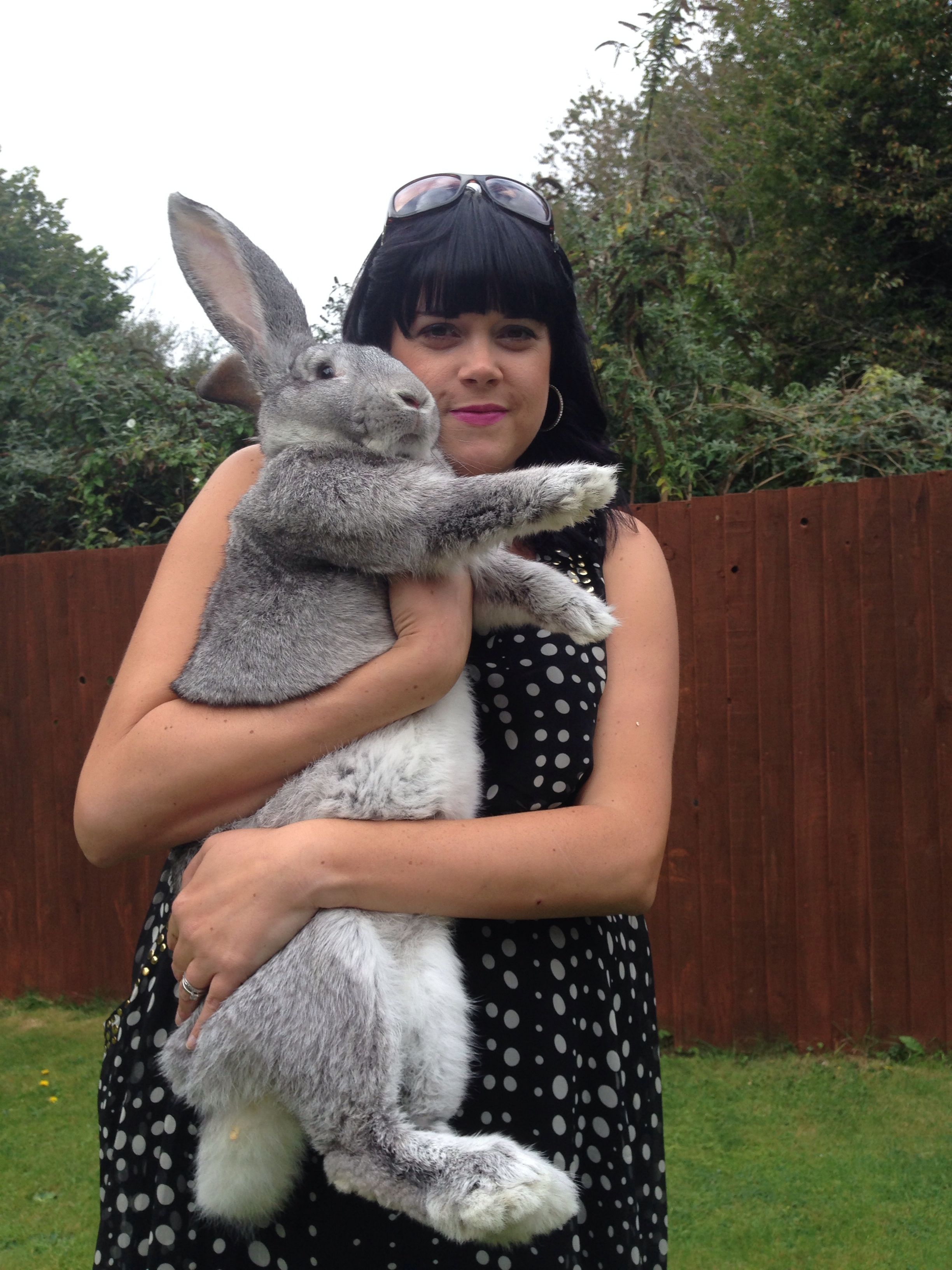 Giant Continental Rabbit Chincilla 6 Months I Want A Trio Of These Beauties Giant Rabbit Rabbit Cute Baby Bunnies