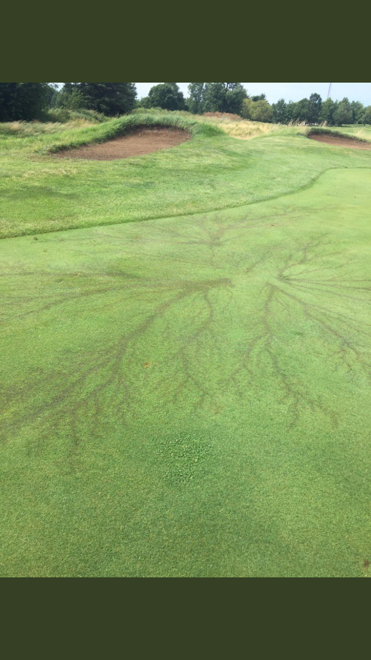 Lightning struck the fairway at a local golf course near