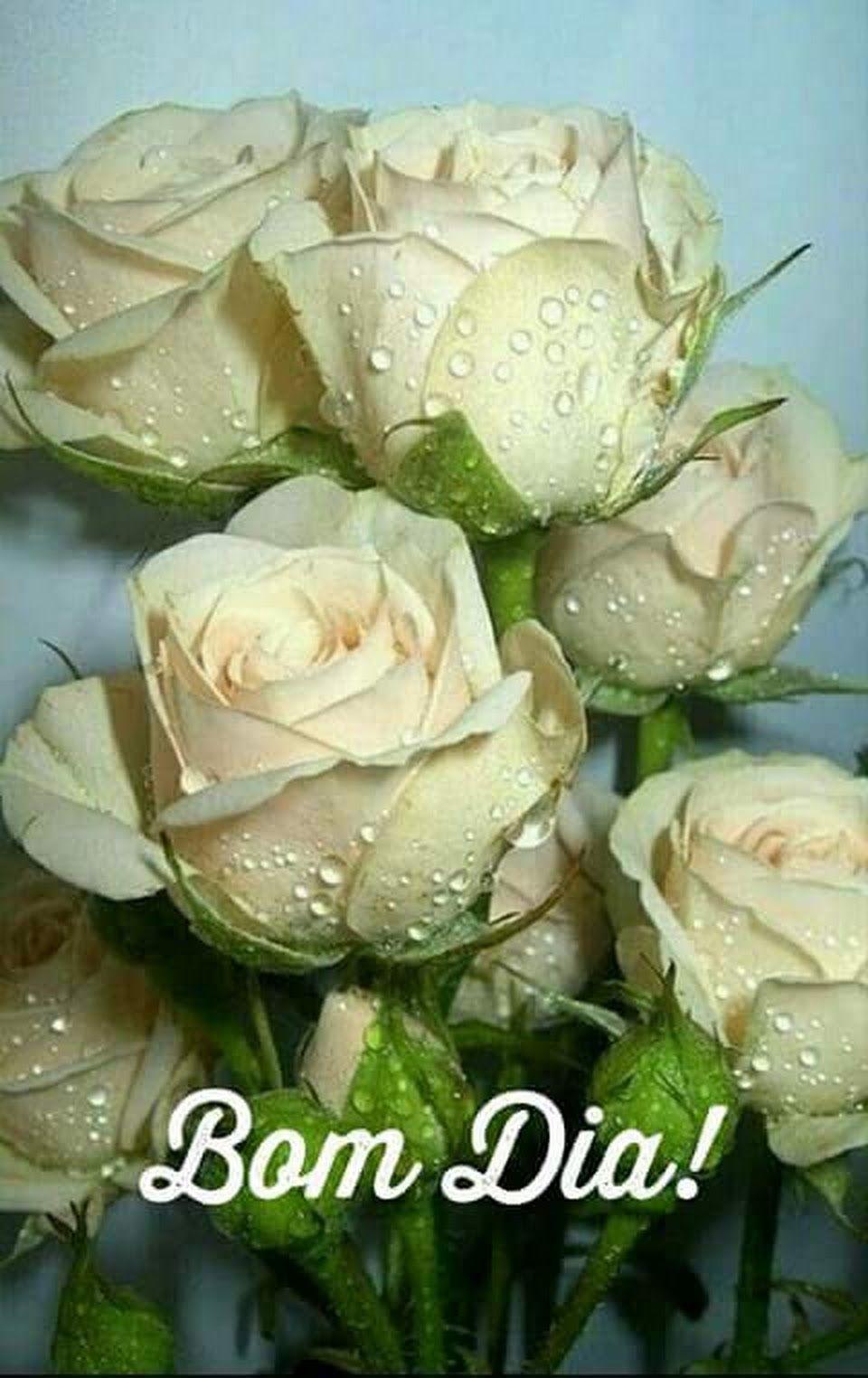 Bom Dia Meus Amores Rosas Lindas Melhores Flores Flores Bonitas